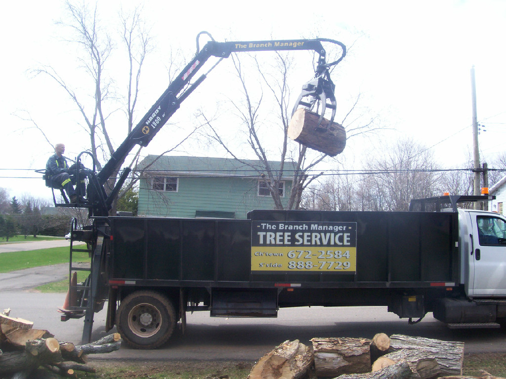 The Branch Manager tree removal